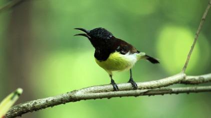 bird-3389640_960_720